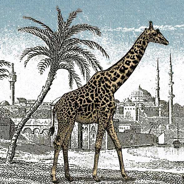 Can You Find The Hidden Giraffe Richard Wiseman