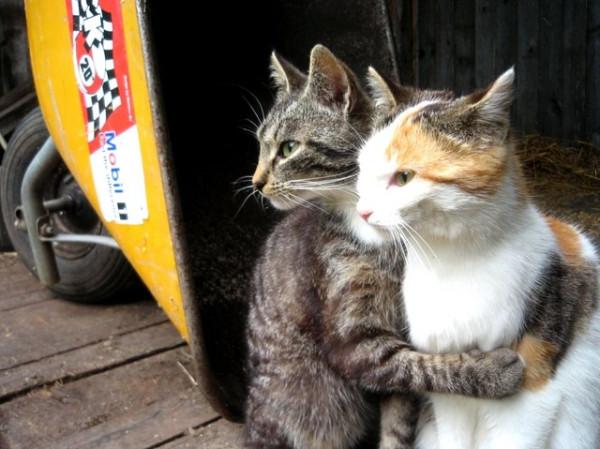 cats-hugging.jpg