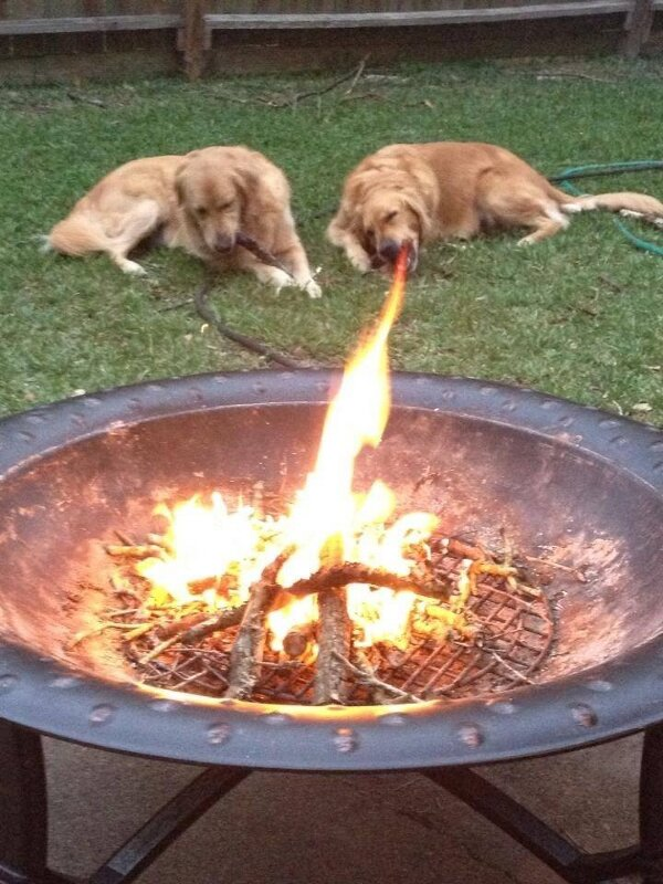 Fire-breathing-dog