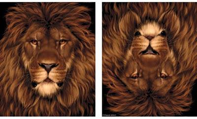 lionillusion